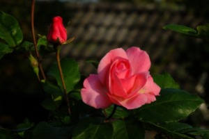 nature-780751_1280